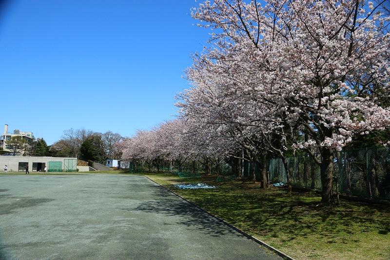 桜グランド2.jpg