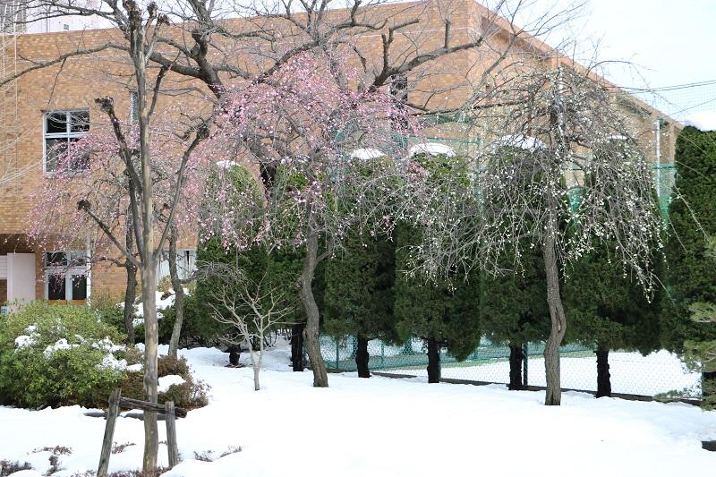 雪、梅.jpg