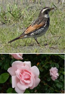 2021-07-19_EndOfSemester_Bird&Rose.jpg